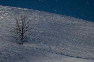albero-luna-stelle